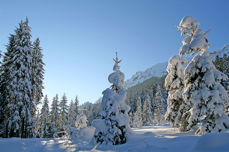 Winter scene, Morgins / Paysage hivernal, Morgins