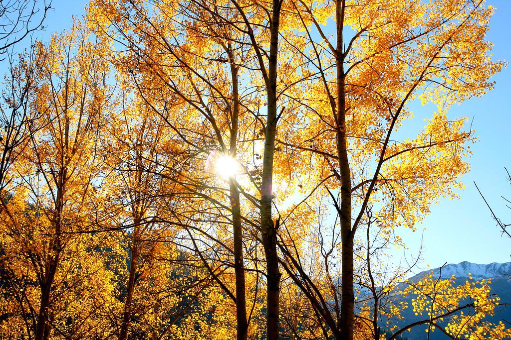 Autumn colours, Val de Bagnes / Couleurs d'automne, Val de Bagnes