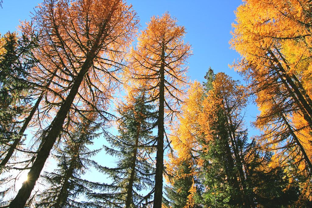 Autumn colours / Couleurs automnales, Vallée du Trient