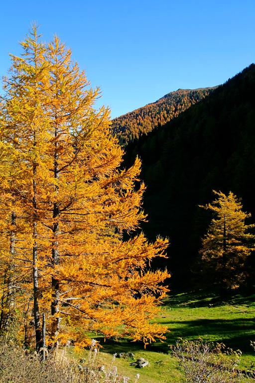 Col de la Forclaz, Vallée du Trient