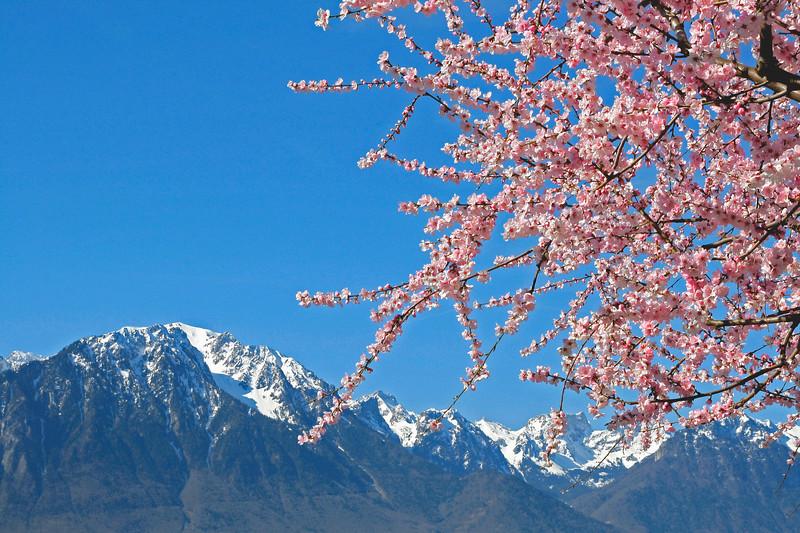 Spring has arrived in Montreux/ Le printemps est arrivé à Montreux