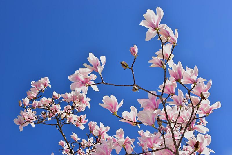 Spring in Montreux / Printemps à Montreux