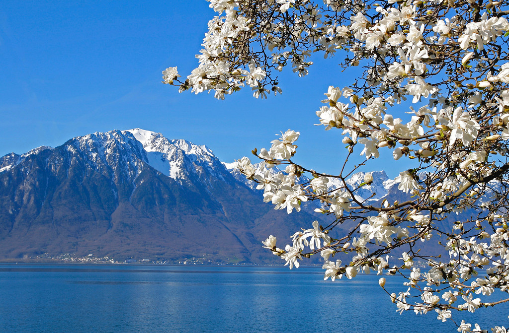 Spring has arrived in Montreux/ Le printemps est arrivé à Montreux
