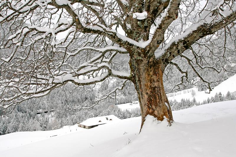Snow scene/ Chalet sous la neige
