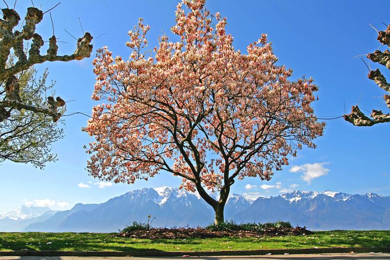 Spring in Vevey / Le printemps à Vevey