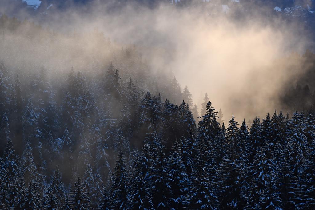 Winter mist /Brume hivernale