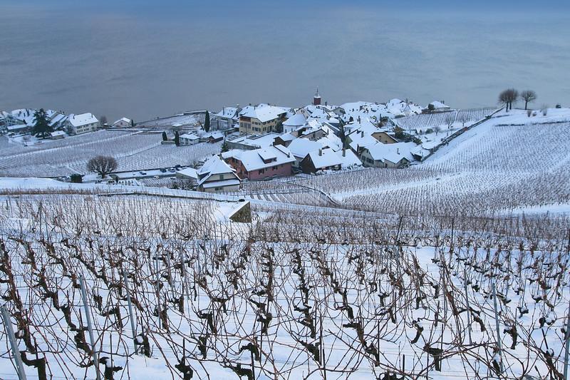 Rivaz, Lavaux snow scene / Rivaz, Lavaux sous la neige