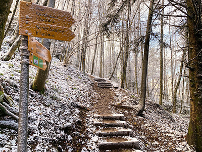 Trail to Bachtel, a small hill outside Wald, Switzerland.