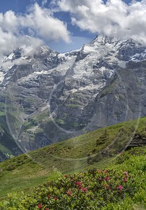 Wirzelegg Muerren Eiger Moench Jungfrau Flower Snow Alps Shore Royalty Free Stock Photos Senic - 021400 - 15-06-2017 - 7312x10492 Pixel
