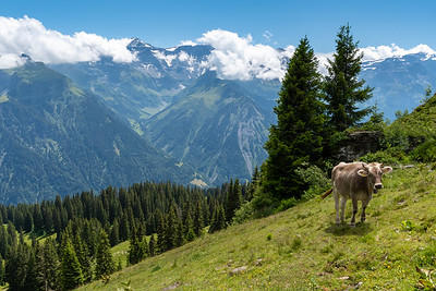 View from Braunwald to the GlarusAlps - roughly the area where I hiked two weeks ago.
