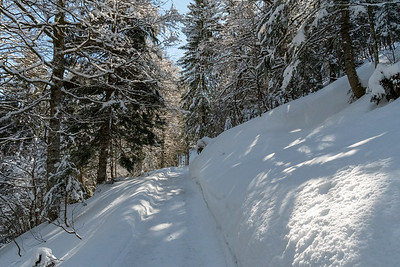 The road from Braunwald to Nussbüel passes through a pretty forest.