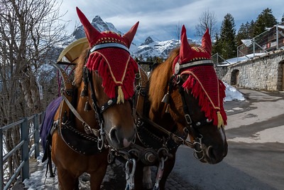 Horses for the carriage ride in Braunwald.