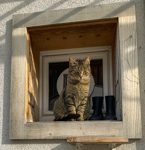 A cat in Schwanden; Puss and Boots.