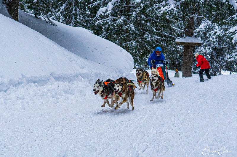 Sled dog race, San Bernardino, Grigioni, Svizzera