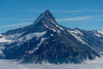 Schreckhorn and glaciers above Grindelwald, seen from Winteregg near Faulhorn.