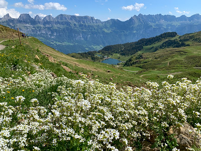 Wildflowers and the view from Flumserberg.