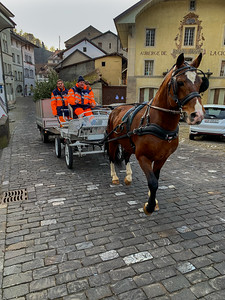 Horse-drawn cart collects leftover Christmas trees from the streets of Fribourg.