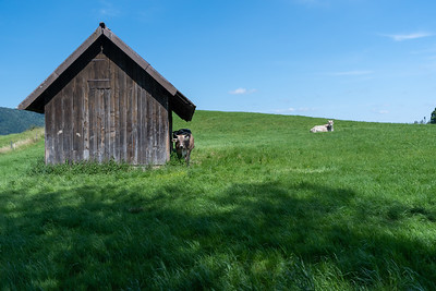 Scenes from a walk through the outskirts of Langnau-Gattikon, near Thalwil, near Zurich.