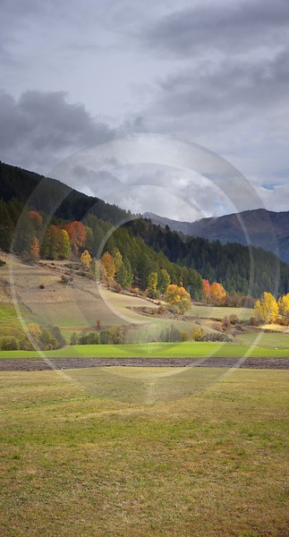 Fuldera Grisons Tree Mountain Autumn Color Switzerland Modern Art Prints Art Photography For Sale - 004805 - 10-10-2009 - 4309x8003 Pixel