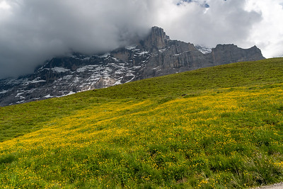 A field of wildflowers below the north face of the Eiger.