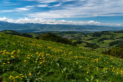 Wald, Rapperswil, Zurichsee, and the Glarus Alps, seen from the hills.