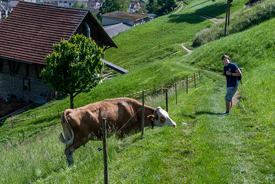 Andy pauses our return to Alpnachstad to greet a grazing cow.