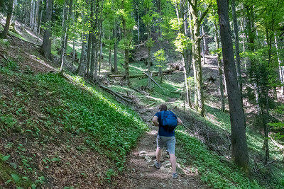 Andy on the trail to Pilatus, where the trail passes through a beautiful section of forest.