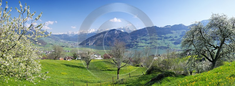 Steinerberg Schwyz Fine Art Posters Stock Photos Grass Fine Arts Photography Fine Art Ice Outlook - 000969 - 15-04-2007 - 11083x4078 Pixel