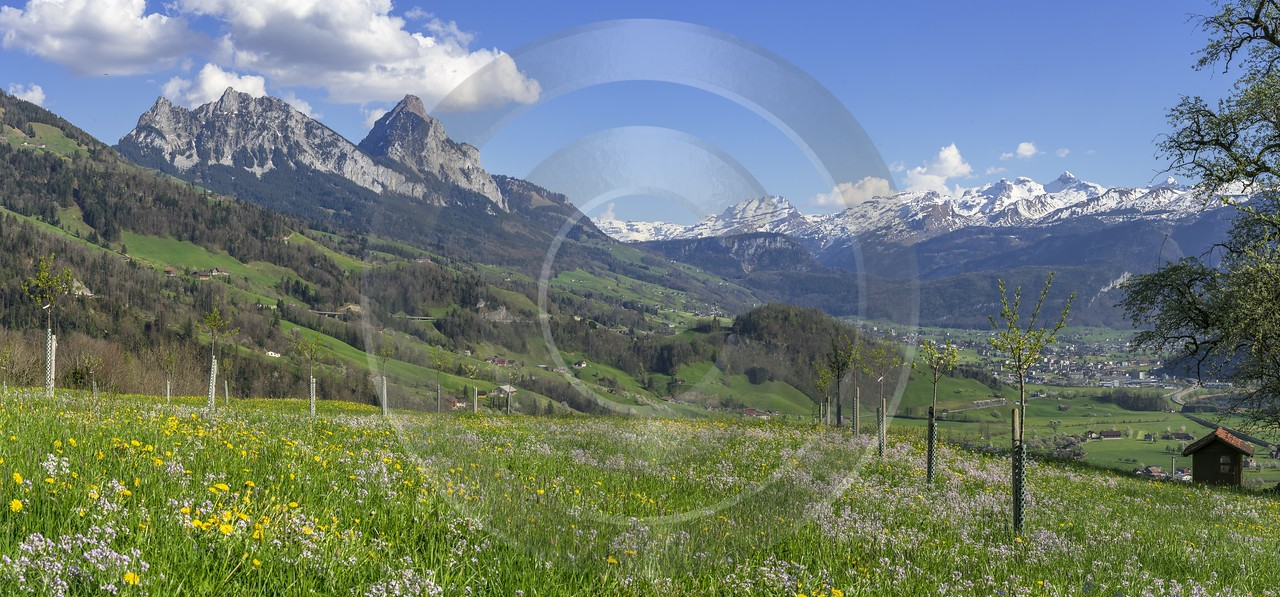 Steinerberg Schwyz Blumenwiese Bluehende Obstbaeume Grosser Kleiner Mythen Stock Photos Color Ice - 021046 - 09-04-2017 - 16536x7707 Pixel
