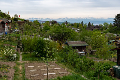 The community garden on Zurichberg, with a wonderful view of the Alps.