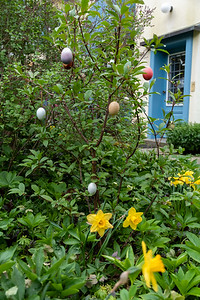 A small tree decorated with Easter eggs outside a Zurich house.