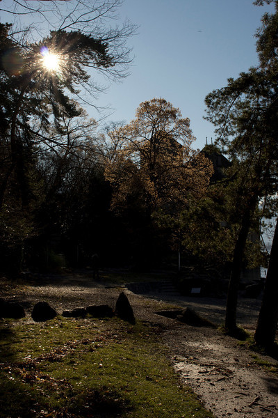Switzerland, Chillon, Sun in Trees SNM