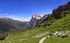 Eiger Trail - Wetterhorn Vista