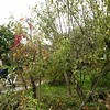 (From the front) the apple/pear trees