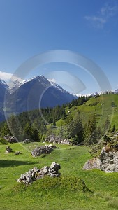 Intschi Arnisee Sommer Wiese Weide Wald Tanne Panorama Famous Fine Art Photographers Park - 005290 - 01-06-2009 - 4318x7669 Pixel