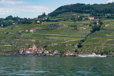 Vineyards climb the slopes outside Vevey, Switzerland.