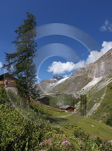 Zermatt Staffel Alphuette Sommer Berg Alpen Panorama Hdr Flower Sky Modern Art Prints View Point - 004240 - 09-08-2009 - 4238x5726 Pixel