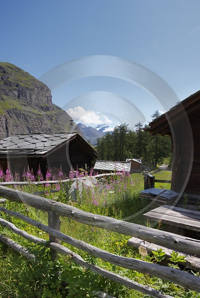 Zermatt Staffel Biel Alphuette Sommer Berg Alpen Panorama Order Mountain Art Photography For Sale - 004243 - 09-08-2009 - 4293x6386 Pixel