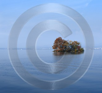 Zugresee Herbst Autumn Tree Zug Lake Mountain View Cloud Art Prints For Sale Fine Art Pictures - 004176 - 08-11-2008 - 4109x3739 Pixel