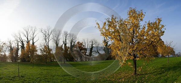 Zugresee Herbst Autumn Tree Zug Lake Mountain View Photography Prints For Sale Fine Art Photography - 004173 - 08-11-2008 - 7897x3633 Pixel