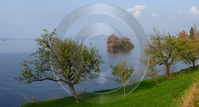 Zugresee Herbst Autumn Tree Zug Lake Mountain View Fine Art Photography Prints For Sale Ice - 004174 - 08-11-2008 - 5117x2756 Pixel