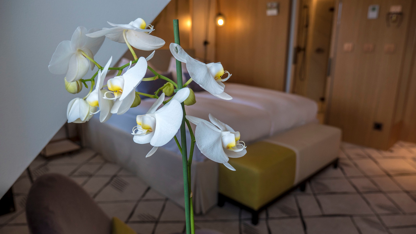 Close-up of the beautiful orchid in our room at the Hotel Storchen Zurich.