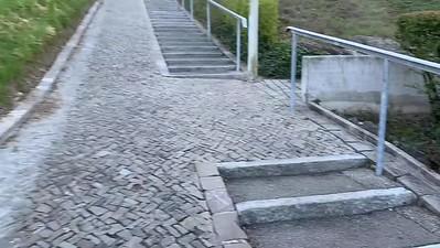 My morning walk to Zurichberg.