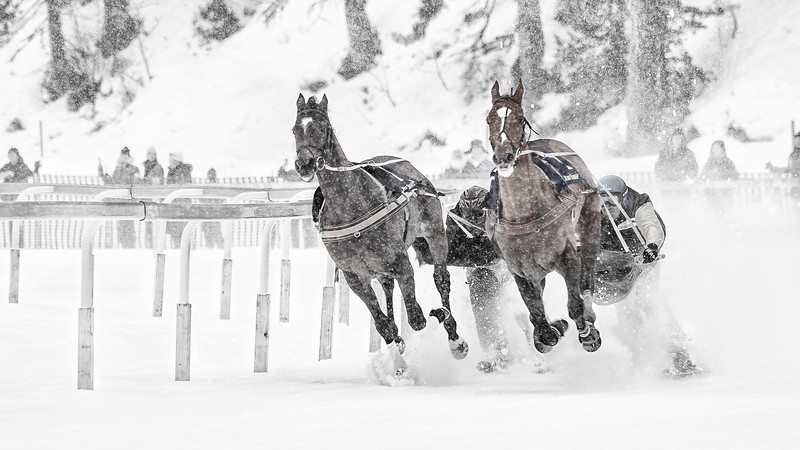 White Turf; Horse Races on Snow; Sankt Moritz; Graubünden; Switzerland