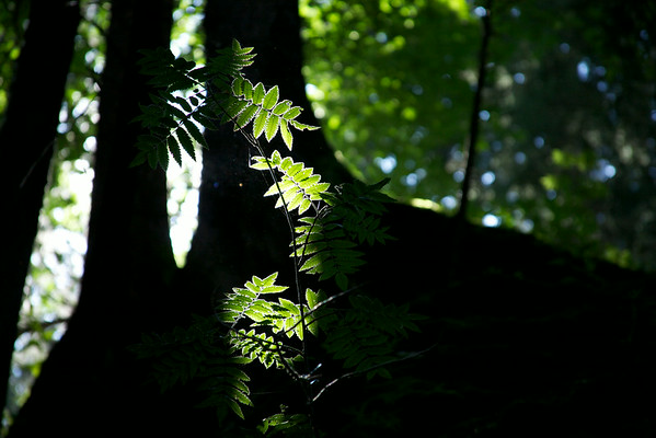 New Growth.   What was lost, what was gone.  Out of the shadows. Out of the depths.