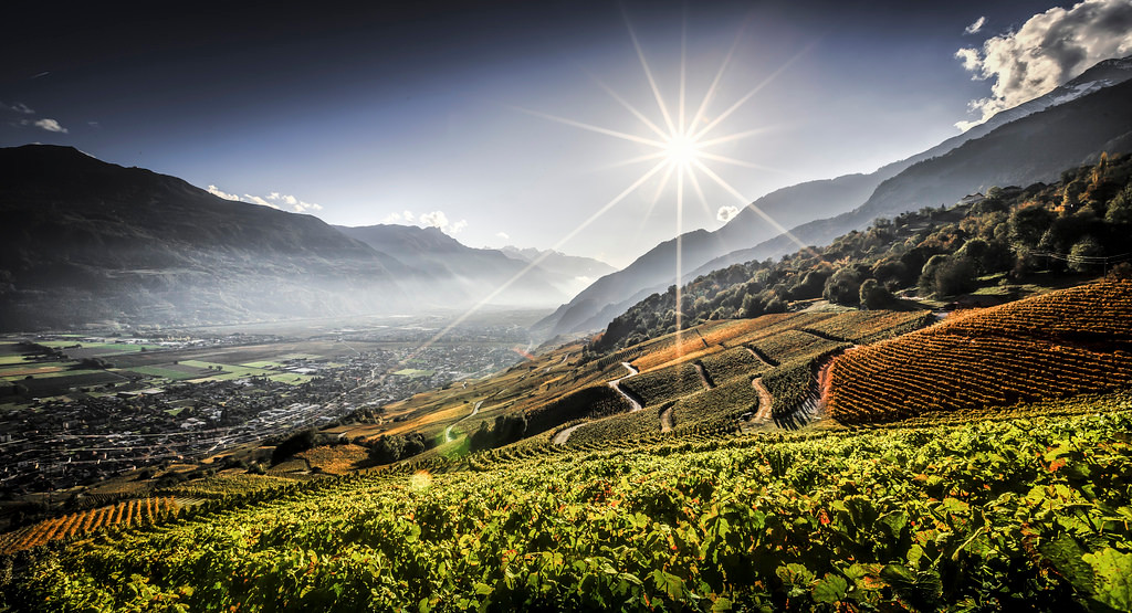 Vineyards Valais 2