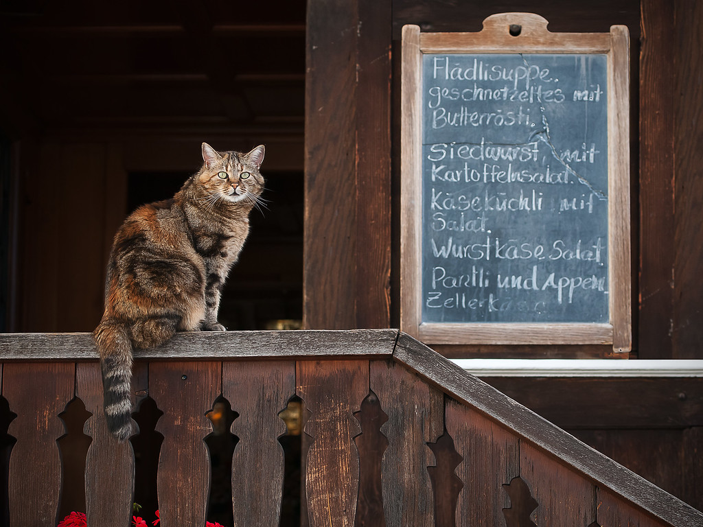 Cat; Menu: Appenzell; Appenzell Innerrohden; Switzerland