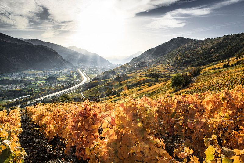 Vineyards, Valais