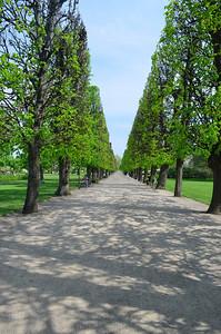 Cone Trees