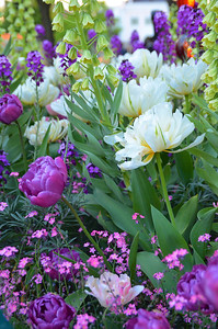 Gardens of Tivoli